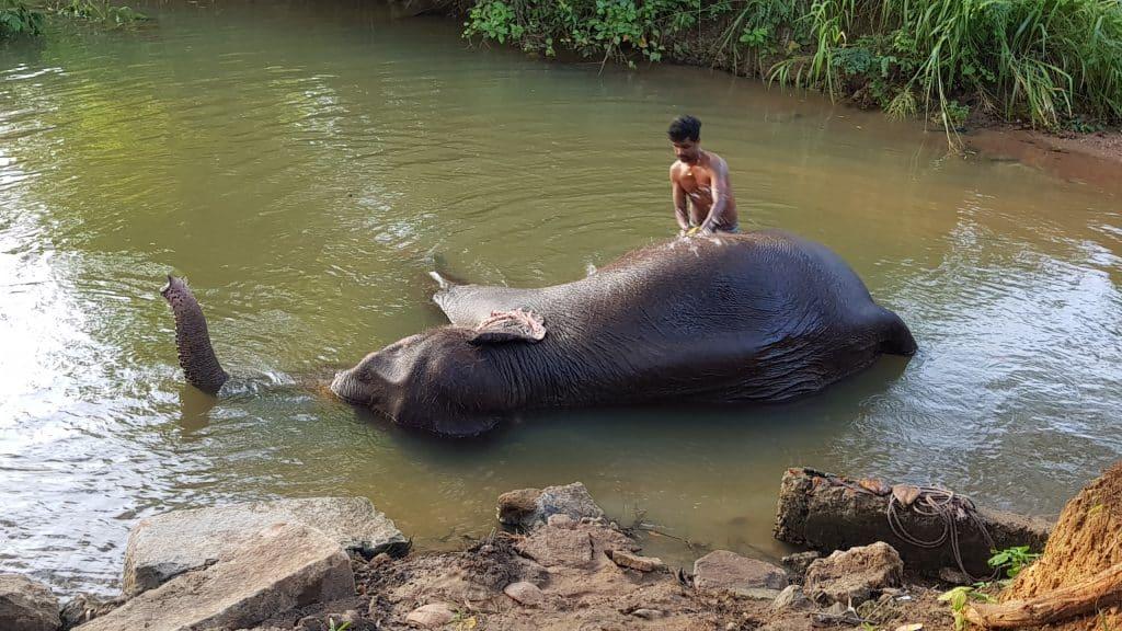 éléphants sri lanka