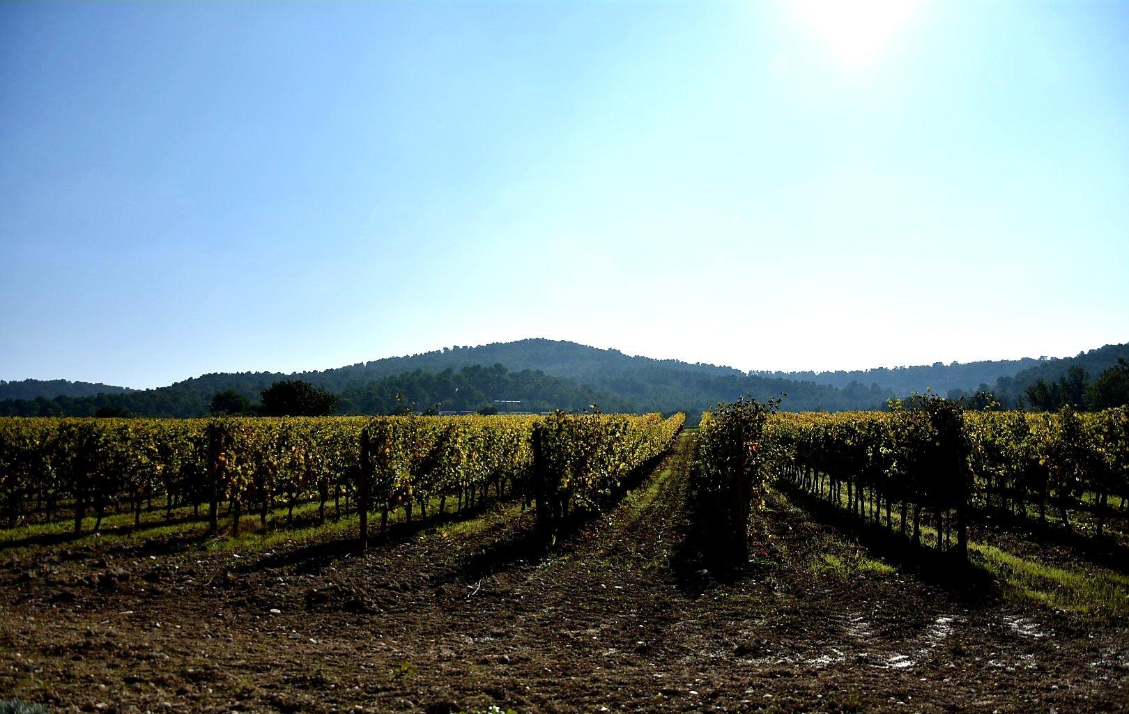 Château La Coste: le vin et l'art contemporain.