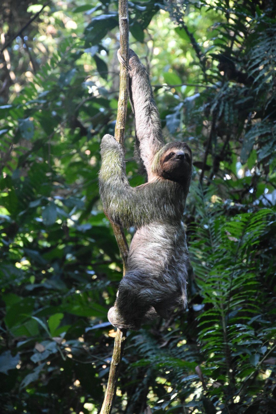 COSTA RICA: Le parc Manuel Antonio et ses environs