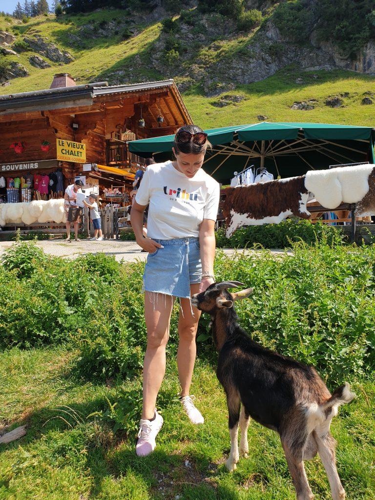 village des chèvres les lindarets 4