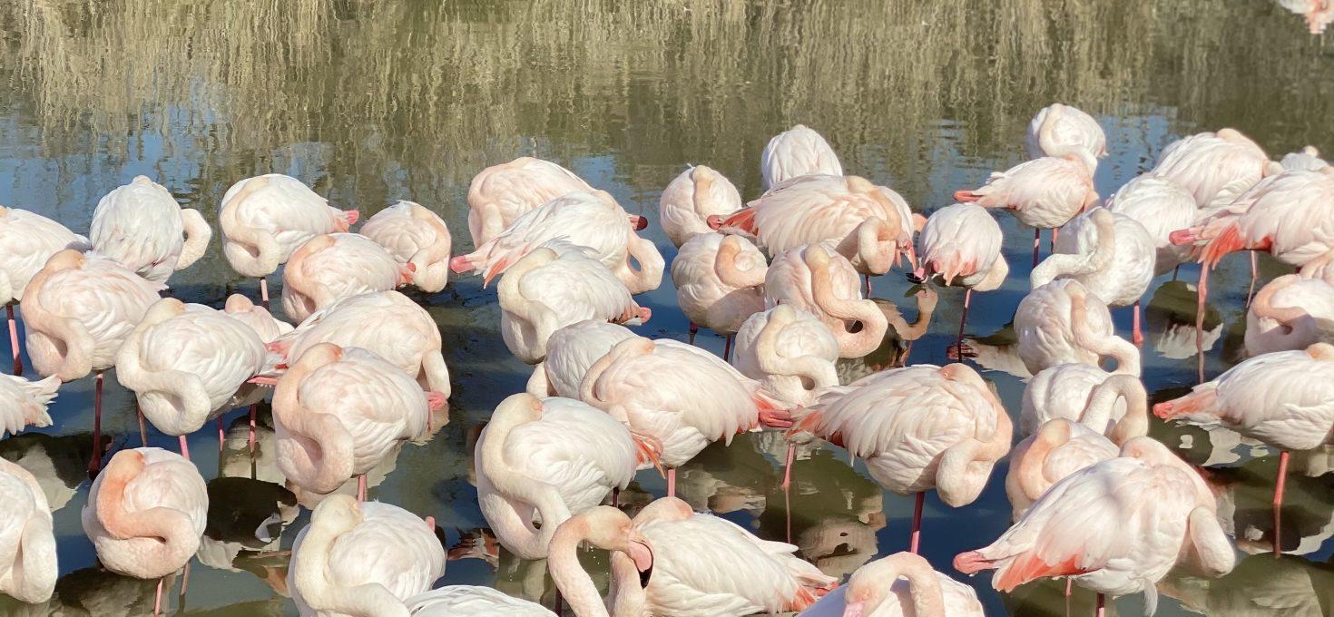Le parc ornithologique du Pont de Gau en Camargue
